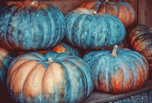 カビ かぼちゃ 白
