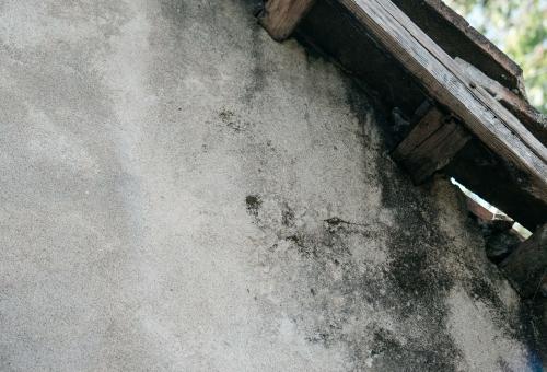 カビ コンクリート 除去 対策