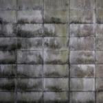 コンクリートのカビの原因や除去方法とは!?